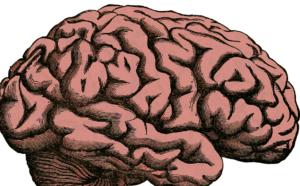 graphic of human brain